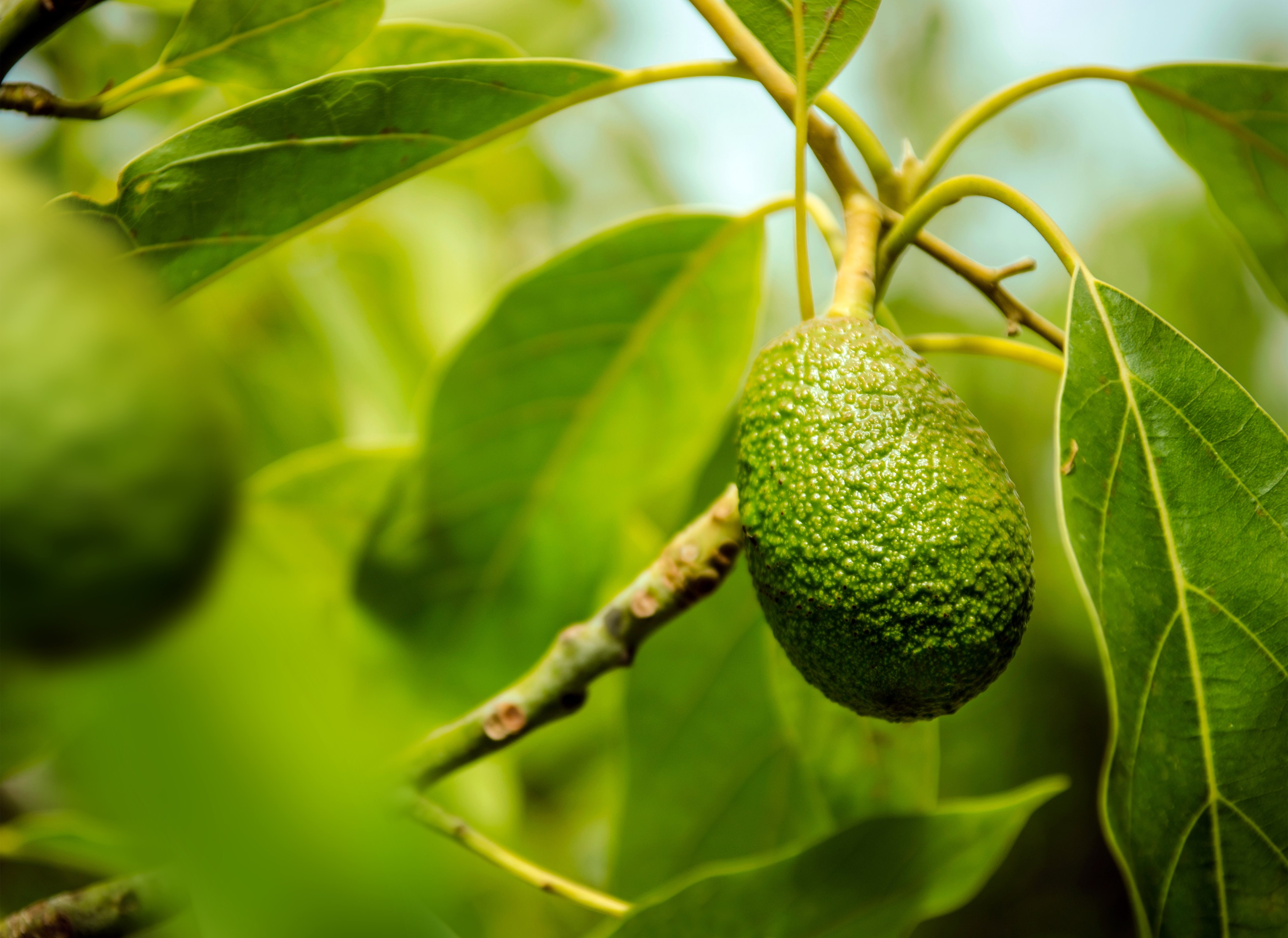 One avocado in thousands: Using the power of the cloud to improve quality and business processes
